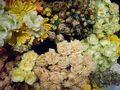 Silk flowers 2
